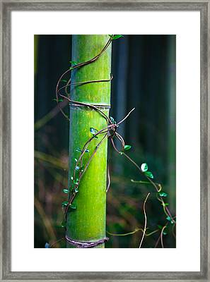 Framed Print featuring the photograph A Little Help From A Friend by Brad Brizek