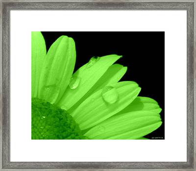 A Little Lime On Twist Framed Print
