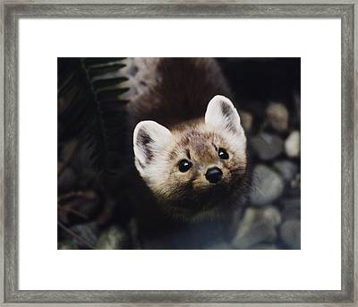 Framed Print featuring the photograph A Little Martin Looking Up At Me. by Myrna Walsh
