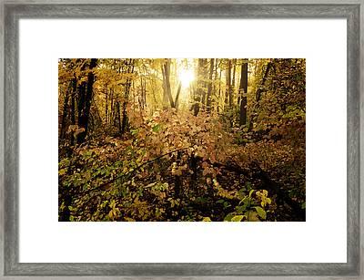 A Little Morning Light Framed Print