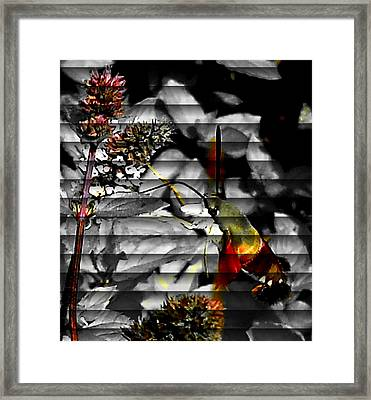 Framed Print featuring the photograph A Little Peak by Yolanda Raker