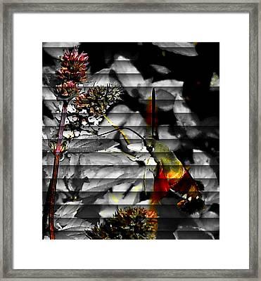 A Little Peak Framed Print by Yolanda Raker