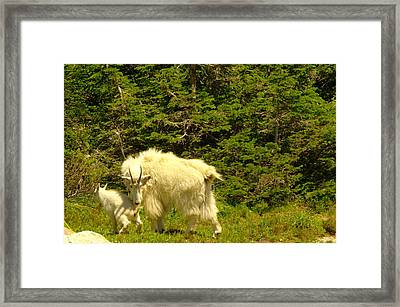 A Little Privacy Please Framed Print by Jeff Swan