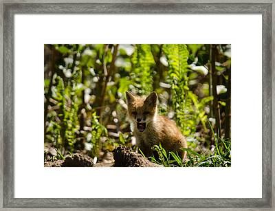 Framed Print featuring the pyrography A Little Tired by Gary Wightman