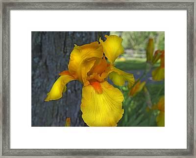 A Lively Soul Blooms Framed Print by Betsy Knapp