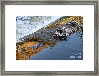 A Log Jams The Dam Framed Print by Ilene Hoffman