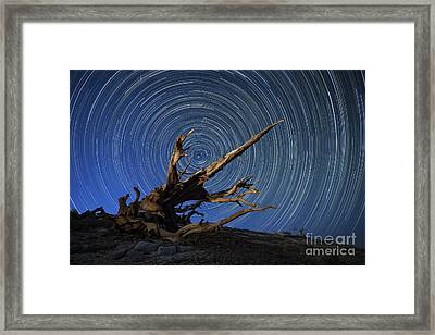 A Lone Bristlecone Pine In The White Framed Print