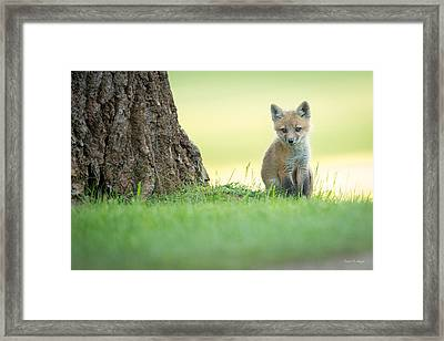A Lone Kit Framed Print by Everet Regal