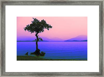Lonely Tree II Framed Print