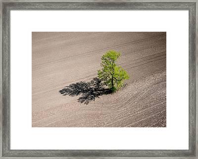 A Lone Tree In A Newly Seeded Corn Field. Richmond Ontario Dairy Farm. Framed Print by Rob Huntley