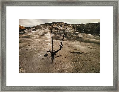 A Lone Tree In The Yelowstone Hot Springs  Framed Print by Jeff Swan