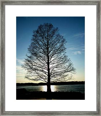 Framed Print featuring the photograph A Lonely Tree by Lucy D
