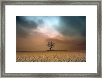 A Loner ... Framed Print