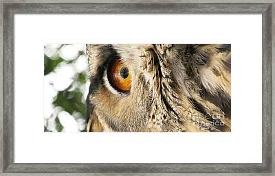 Framed Print featuring the photograph Bubo Bubo- Eurasian Eagle Owl. Close Up. by Ausra Huntington nee Paulauskaite