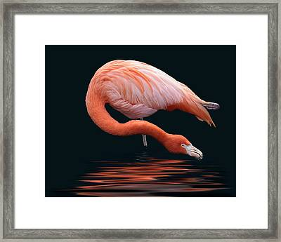 A Long Sip Framed Print