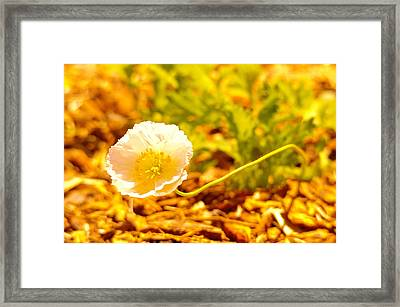 A Long Stemmed Flower Framed Print by Jeff Swan