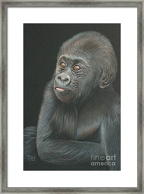 A Look Of Wonder - Baby Gorilla Framed Print
