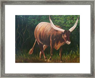 A Lot Of Bull, Watusi  Framed Print