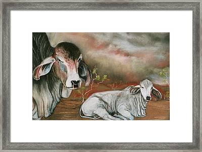 A Lot Of Bull Framed Print by Sandra Sengstock-Miller
