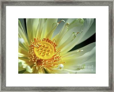 A Lotus Close Up Framed Print