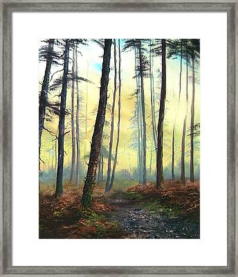 A Lovely Walk On Cannock Chase Framed Print by Jean Walker