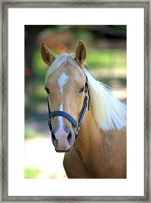 Framed Print featuring the photograph A Loyal Friend by Gordon Elwell