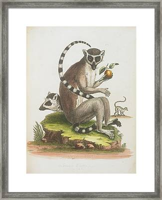 A Macaque Framed Print by British Library