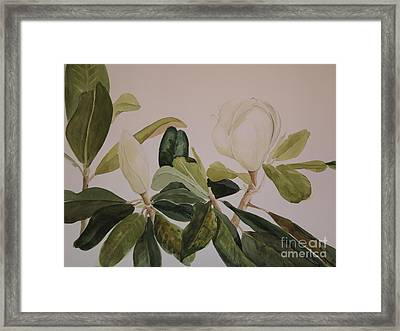 A Magnolia Duet Framed Print by Nancy Kane Chapman