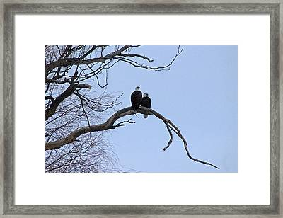 A Majestic Pair Framed Print by Rhonda Humphreys