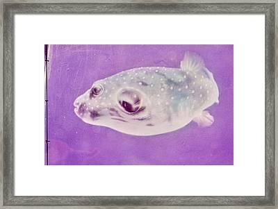 A Makimaki Fish Framed Print by Horst P. Horst