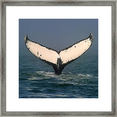 A Mariner's Tail Framed Print by Tony Beck