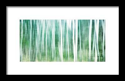 Aspen Forest Framed Prints
