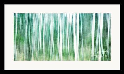 Birch Forest Photographs Framed Prints