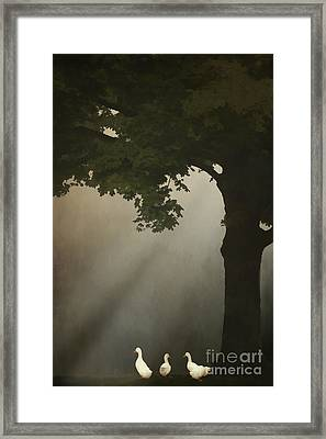 A Meeting Under The Tree Framed Print
