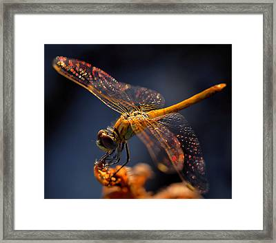 A Midsummer Night's Dream... Framed Print