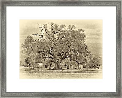 A Mighty Oak - Paint Sepia Framed Print by Steve Harrington