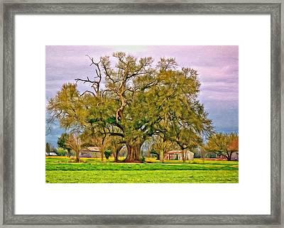A Mighty Oak - Paint Framed Print by Steve Harrington