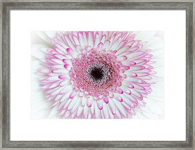 A Million Petals Framed Print