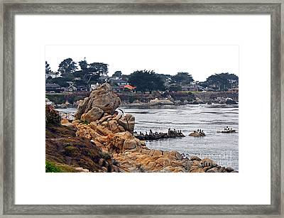 A Misty Day At Pacific Grove Framed Print by Susan Wiedmann