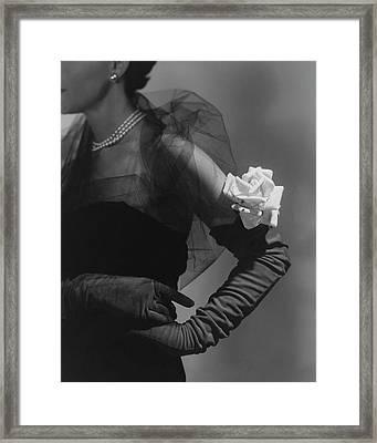A Model Wearing And Velvet Rose Framed Print