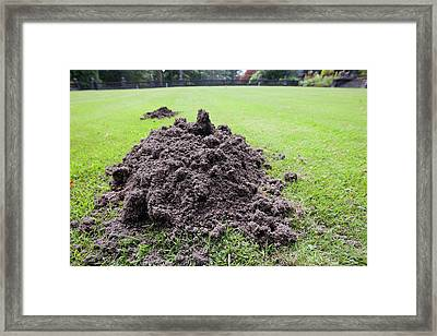 A Mole Hill On A Croquet Lawn Framed Print by Ashley Cooper