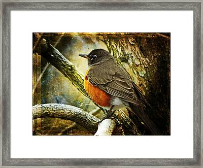 A Moment For Mother Robin Framed Print