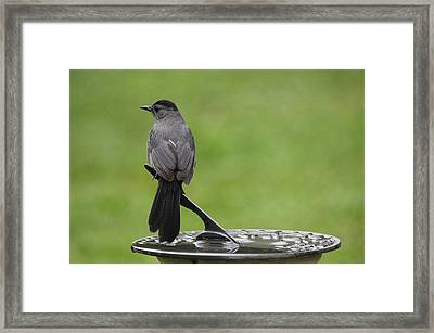 Framed Print featuring the photograph A Moment In Time by Trina  Ansel