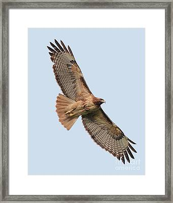A Moment In Time Framed Print by Wingsdomain Art and Photography