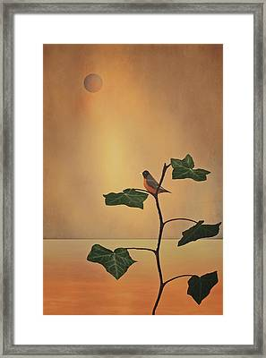 A Moment Of Zen Framed Print by Tom York Images