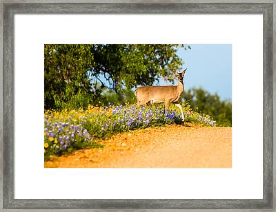A Moment With A Wildflower Deer Framed Print by Ellie Teramoto