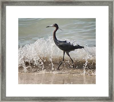 A Morning Stroll Interrupted Framed Print