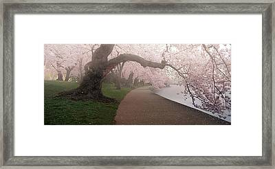 A Morning To Remember Framed Print by Bernard Chen