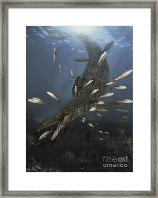 A Mosasaurus Feeds On A Small School Framed Print