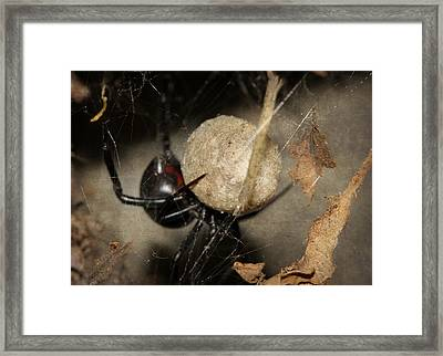 A Mothers Den Framed Print by Melanie Lankford Photography